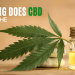 how long does CBD stay in body